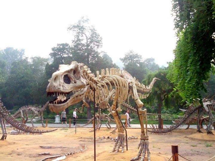 Dinosaur Fossil Beijing