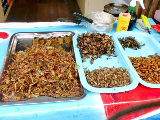 Fried Insects in Thailand