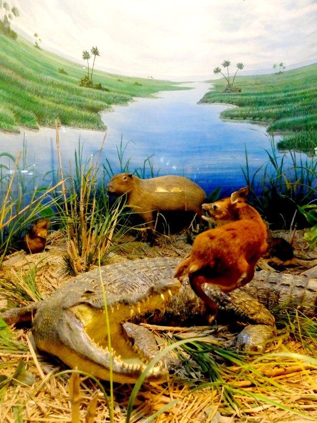 Museum Satwa Wild Animal