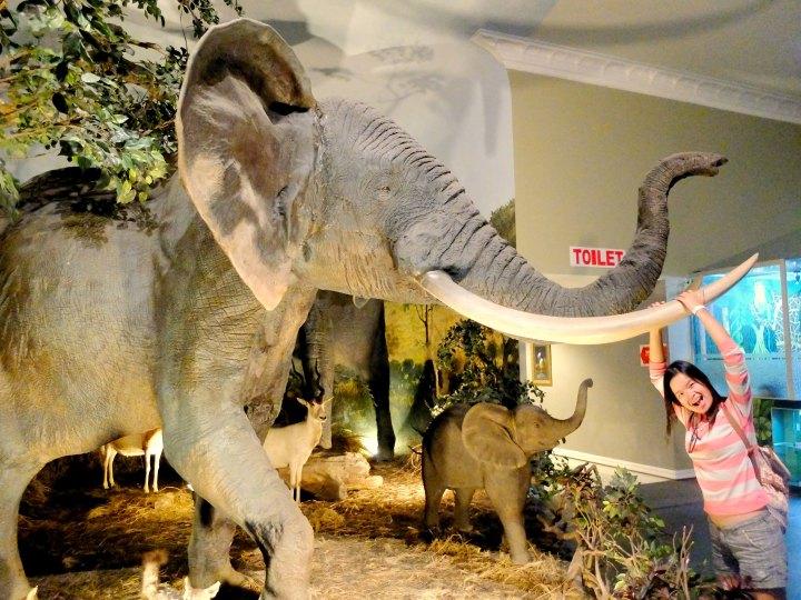 Museum Satwa Elephant