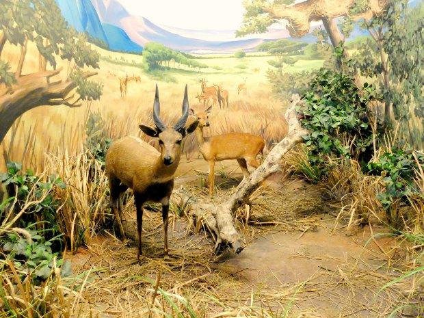 Museum Satwa Animal