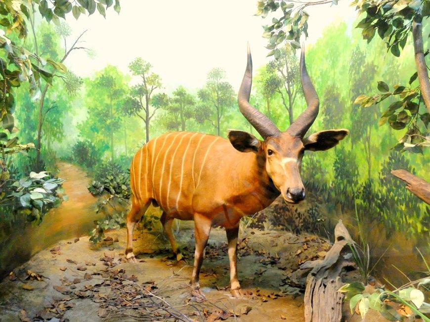 Museum Satwa Diorama