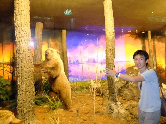 Museum Satwa Bear