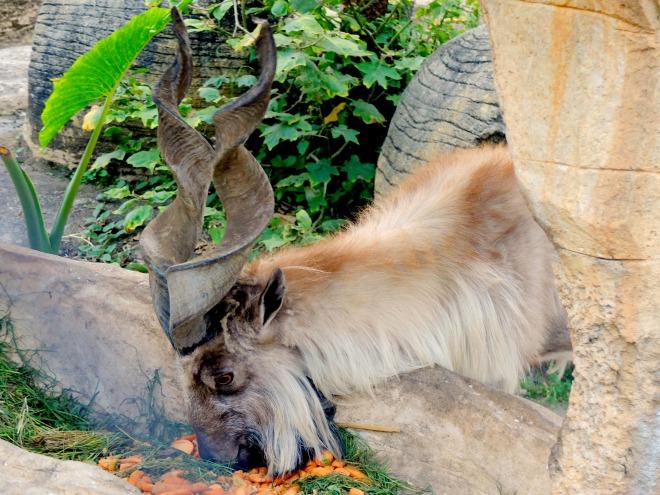 Batu Secret Zoo Savannah