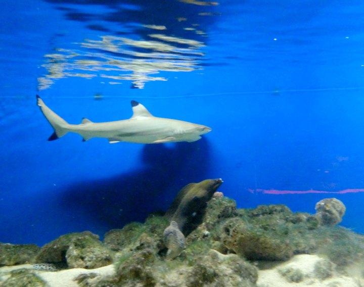 Batu Secret Zoo Aquarium