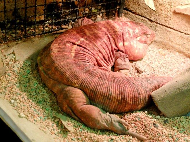 Batu Secret Zoo Animal