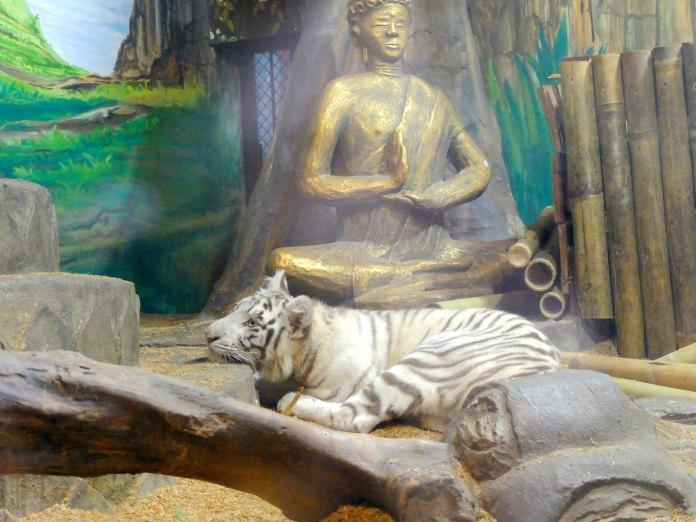 White Tiger Pohon Inn