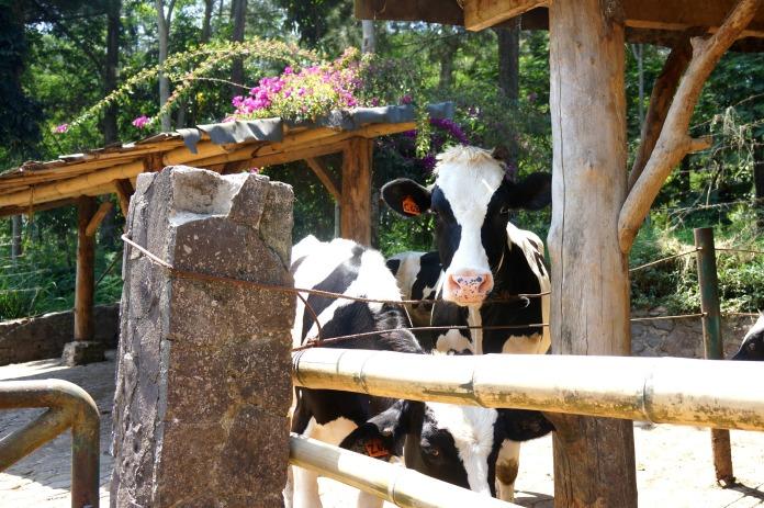 Dago Dairy Bandung