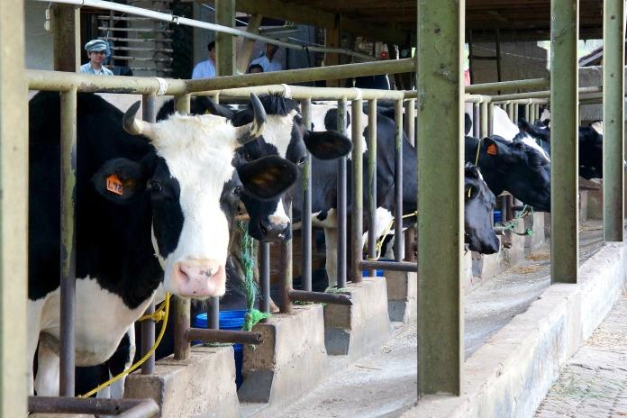 Dago Dairy Farm