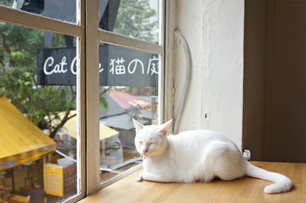 Neko No Niwa Cat Cafe Singapore