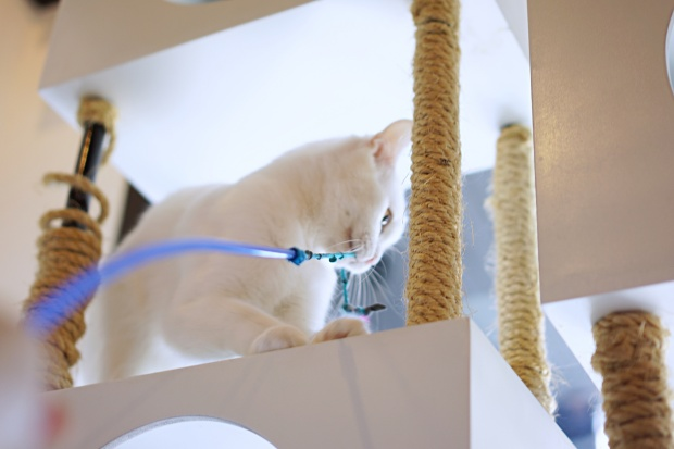 Catmosphere Cat Cafe Chiang Mai