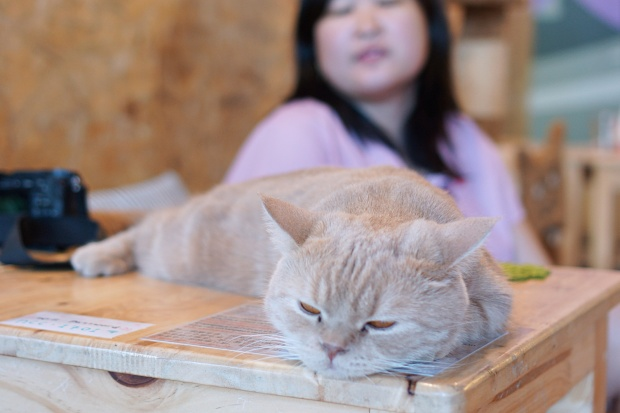 Cat Cafe in Chiang Mai