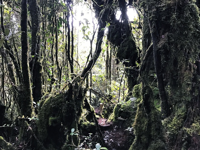Mossy Forest Cameron Highland