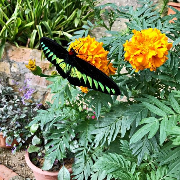 Butterfly Farm Cameron Highland